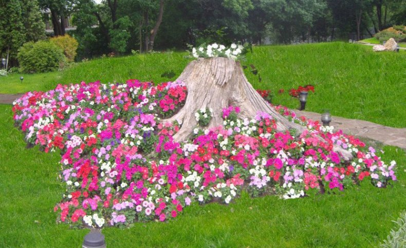 Цветы вокруг пня