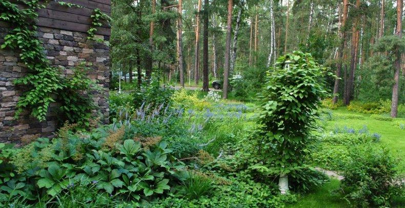 Участок в стиле дикого леса