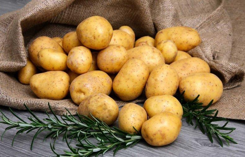 Картофель сорта Рустер лидирует, но уровень посадки близок к рекордно низкому