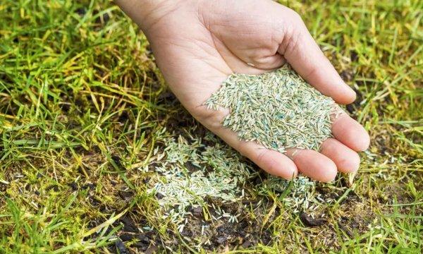 в каком месяце сажать конопляные семена
