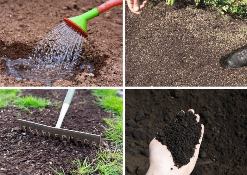 Посев травы под газон