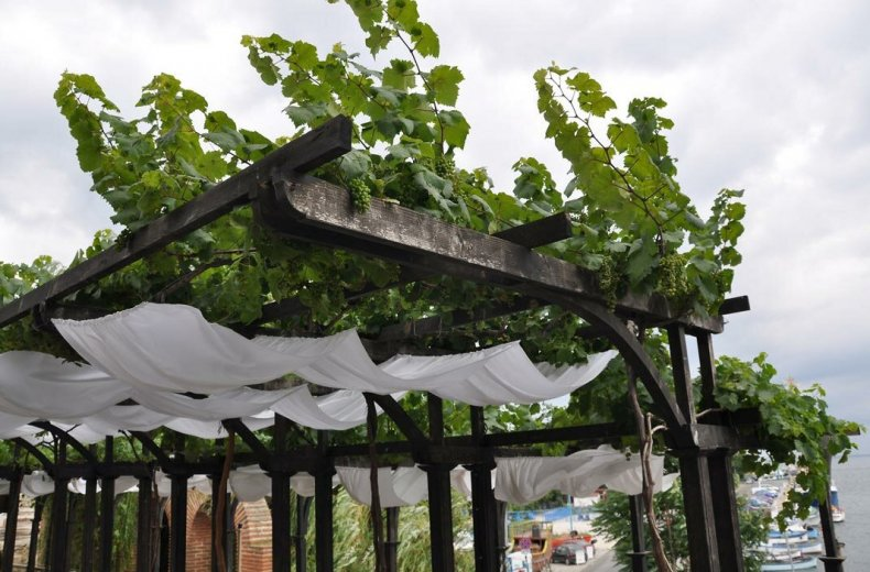 Вертикальное озеленение виноградом