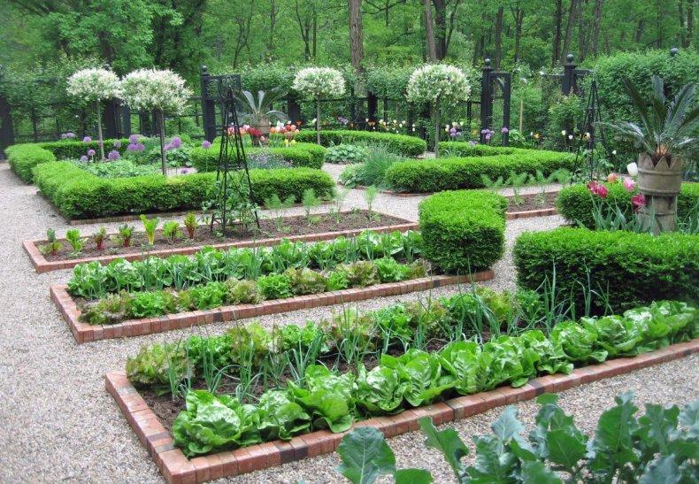 Овощной сад на участке