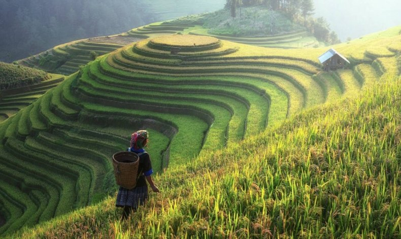 Сельское хозяйство Китая восстанавливается от воздействия COVID-19