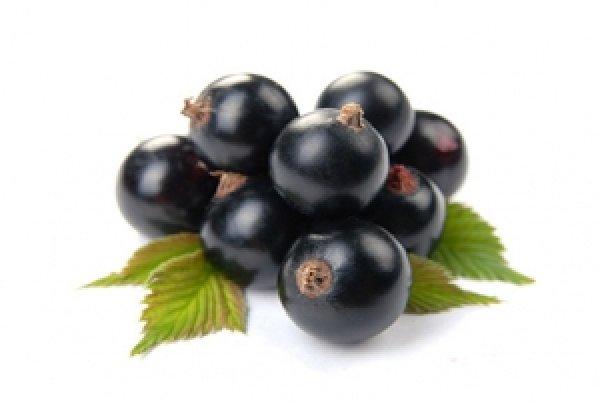 Черный жемчуг лучшие сорта черной смородины