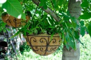 Орхидея в саду