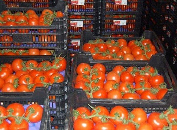 температура хранения томатов свежих