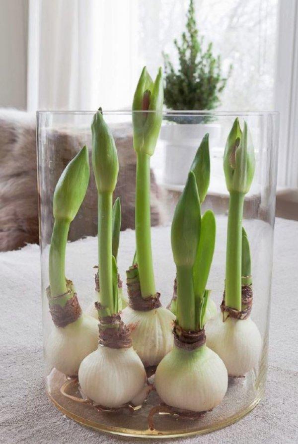 Подкормка в домашних условиях для цветения 743