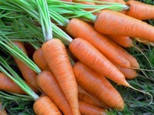 Весенняя посадка моркови