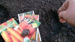 Лучше сажать вымоченные семена