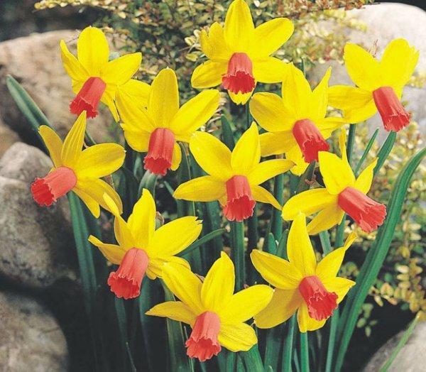 Многолетние цветы для сада: список растений с фото
