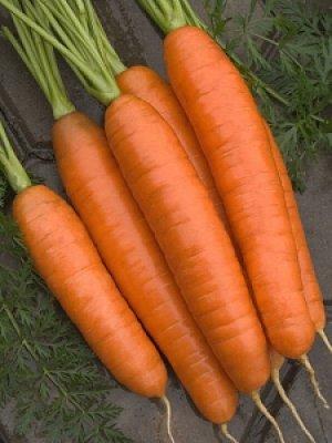 Удобрения только улучшат урожай