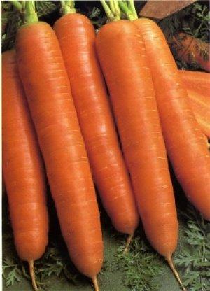 Морковь этого сорта хранится долго