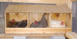 Гнезда должны быть удобными для птиц