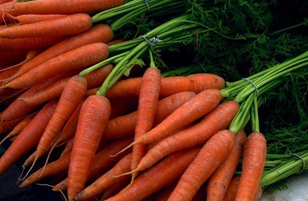Как хранить морковь зимой в погребе и подвале