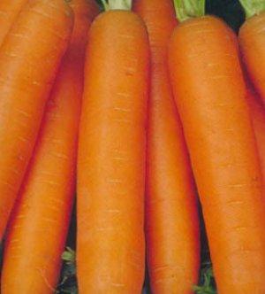 Полив очень важен для моркови