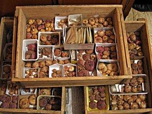Хранение луковиц крокусов