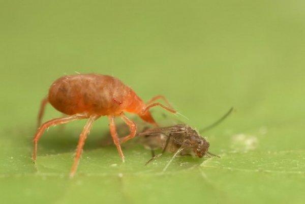 колонии паразитов человеке