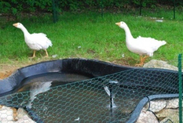 Как сделать водоём для гусей своими руками