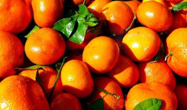 Болезни и вредители цитрусовых растений