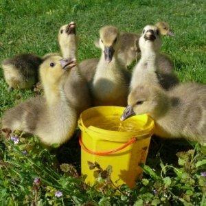 Важно не забывать, что вода также необходима для птиц
