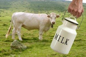 Выбираем корову