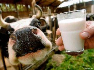 Корова должна выглядеть хорошо, иначе она может быть нездорова