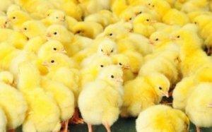 Питание птиц должно включать много витаминов