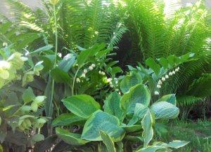 трава для отбеливания зубов
