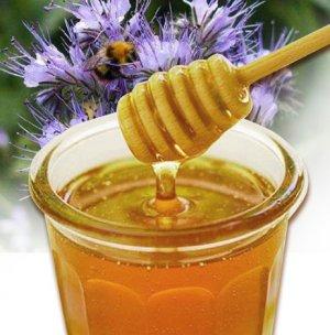 фацелиевый, фацеливого меда, альтернативной медицине, заболеваниях желудка, позволяет пчеловодам