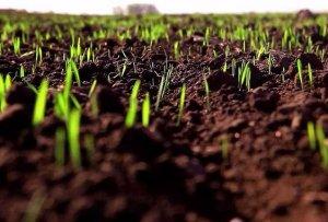 Посев зерновых культур