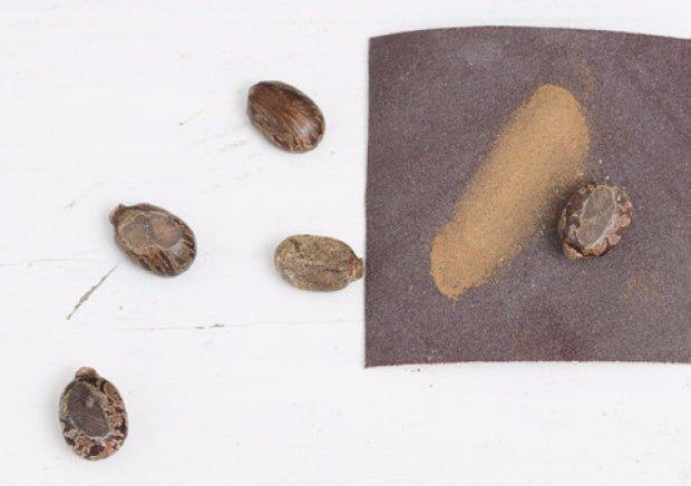 Как из семян вырастить клещевину из семян в домашних условиях