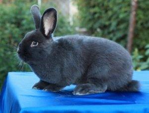 Крольчата растут быстро