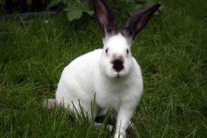 Из мяса кроликов можно приготовить много вкусных блюд