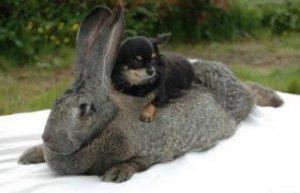 Кролики этой породы бывают разных цветов