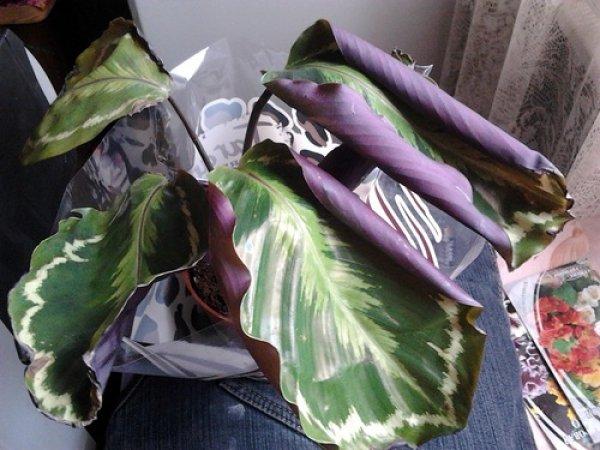 Вязание одеяла спицами для новорожденного