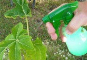 Зеленое мыло для растений