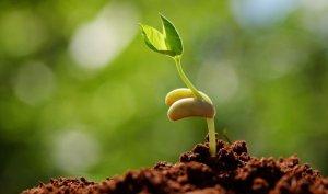 Стимулятор роста растений