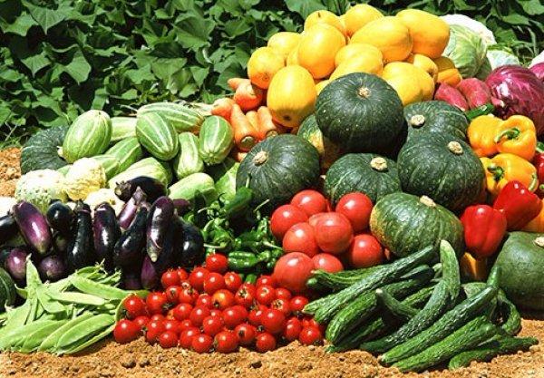 Можно ли сажать помидоры после помидор? После каких культур лучше садить в открытый грунт