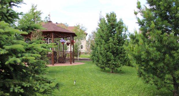 Вечнозеленый кустарник