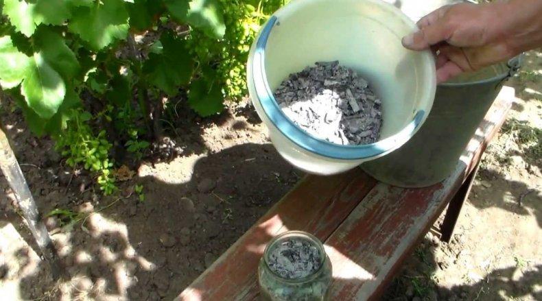 подкормка, клубника, осень, клубники осенью, воды суперфосфата, деревянной золы