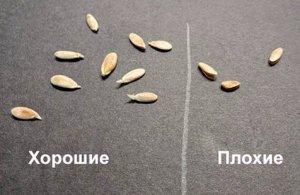 Отбор семян