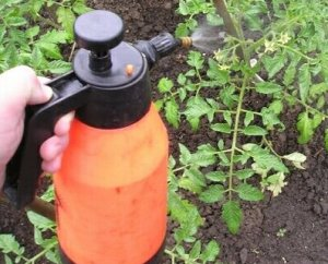 Обработка томатов