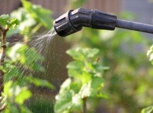 Народные средства для обработки сада