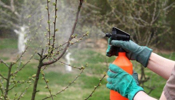 Опрыскивание плодовых деревьев и кустарников весной от болезней и вредителей: сроки, графики, препараты. Когда и чем обработать плодовые деревья и кустарники ранней весной и после цветения?