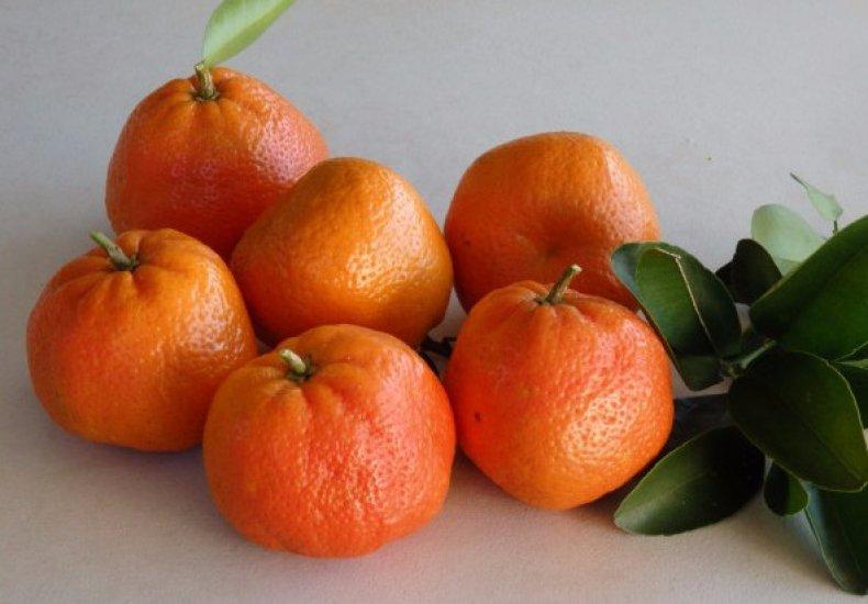 список, сорт, мандарин, грунт, годов века, вертикально вверх