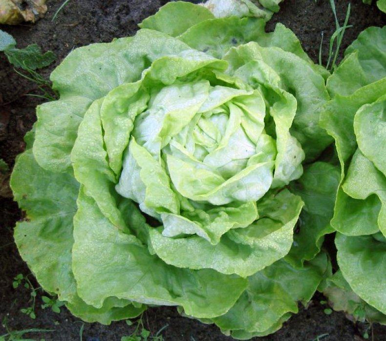 Коочанный салат