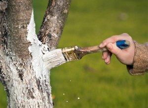 Уход продлит жизнь дерева и улучшит урожаи