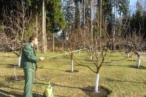Обязательно нужно проводить опрыскивания дерева