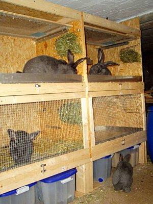 Шед для кроликов